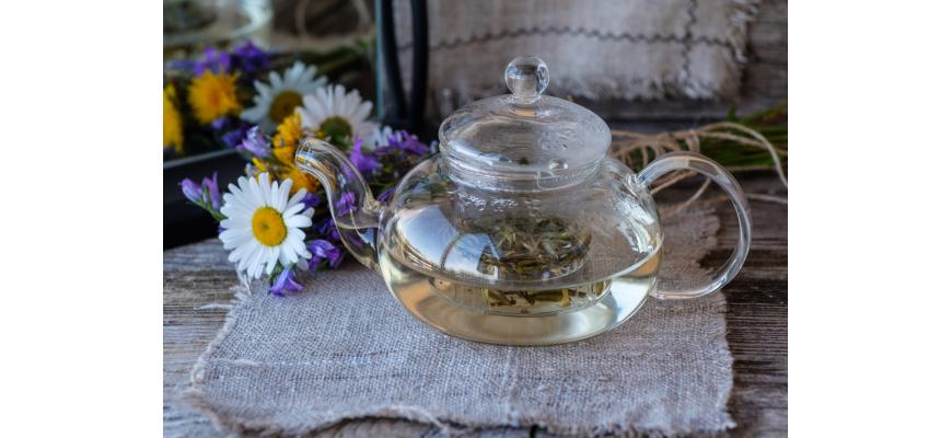 Biała herbata – pochodzenie, powstawanie, właściwości